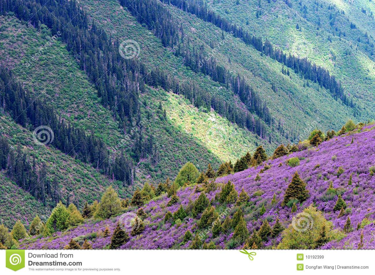 Spring landscape with blooming pink flowers