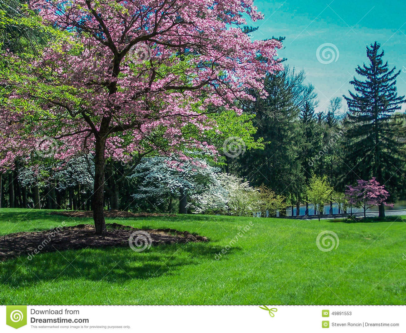 Scenic Spring Landscape - Flowering Dogwood Trees Stock Photo - Image ...