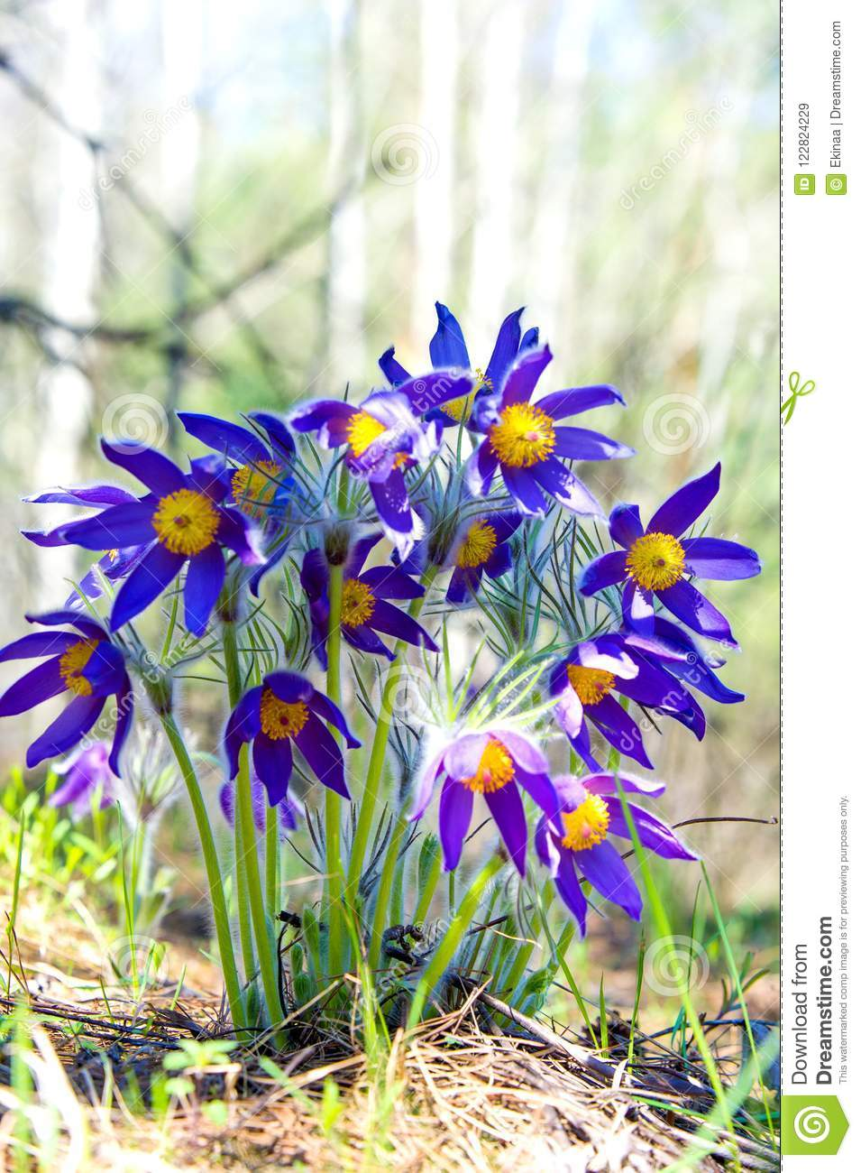 Spring Landscape Flowers Growing In The Wild Spring Flower Pul