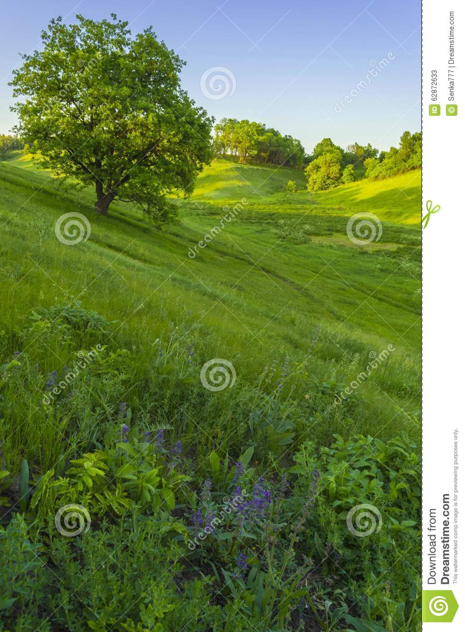 Spring Landscape With Green Grass, Trees And Blue Sky ...