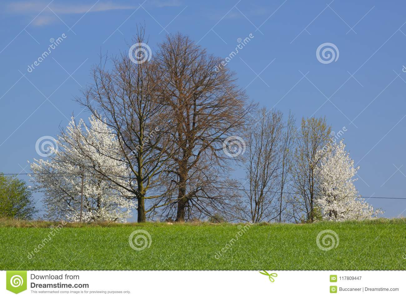 Spring landscape with white flowering trees and blue sky stock image spring landscape with white flowering trees and blue sky izmirmasajfo