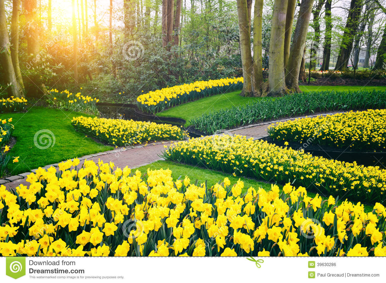 Superb Spring Landscape With Yellow Daffodils. Keukenhof Garden Stock Photo    Image Of Growth, Daffodil: 39630286