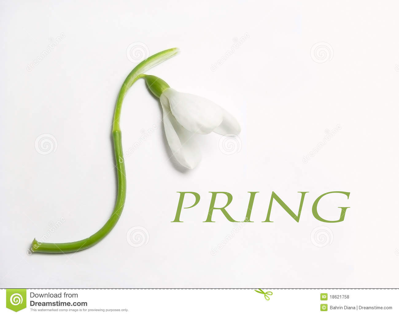 snowdrop in the shape of S letter forming the word Spring.