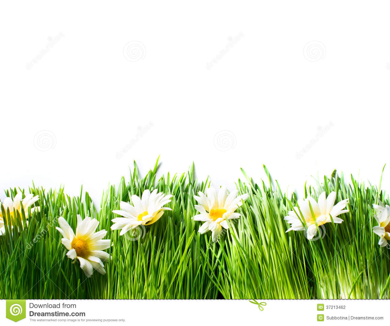 Grass And Flowers Border