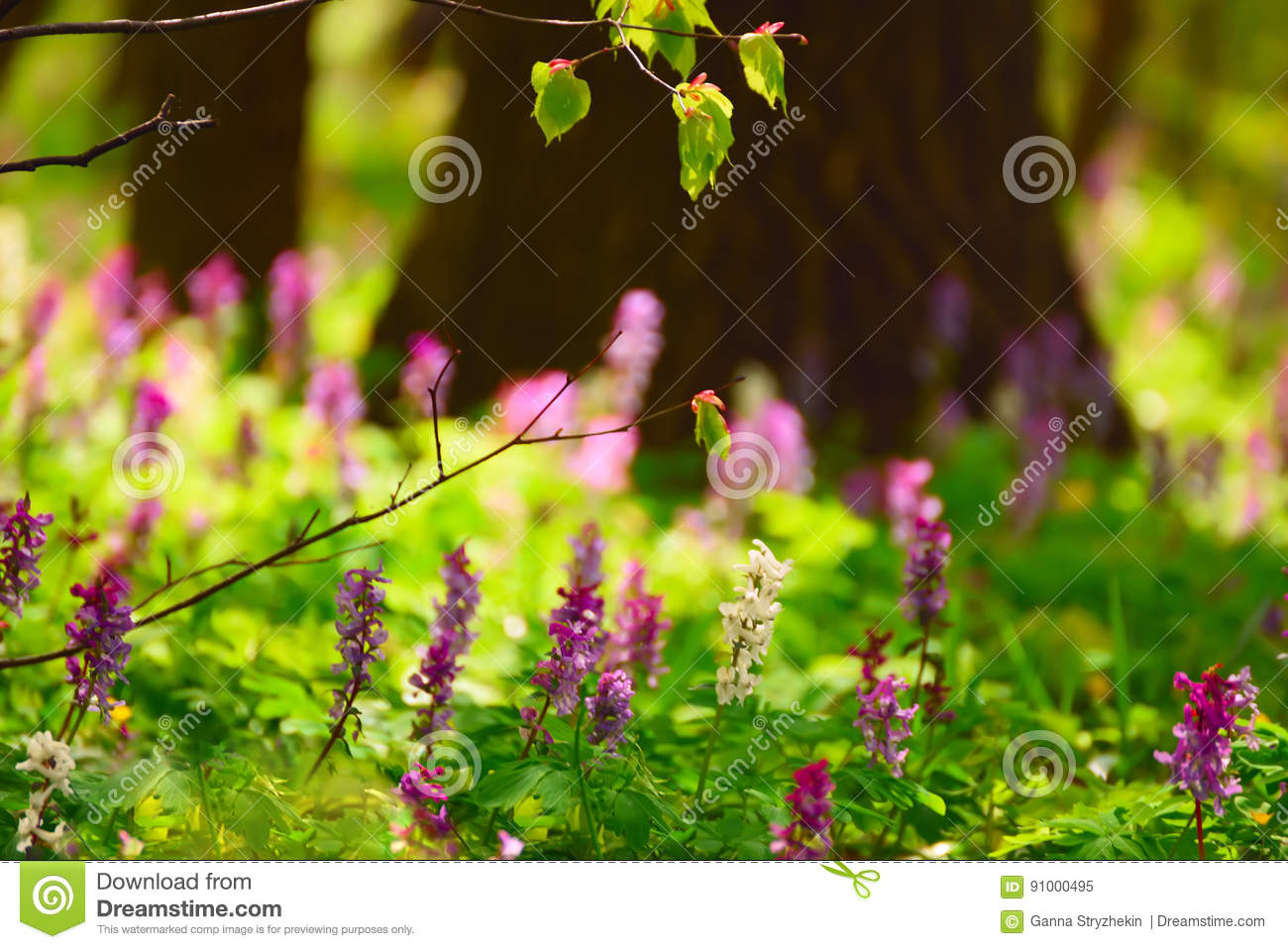 Spring Meadow In The Forest With Flowers Stock Image Image Of