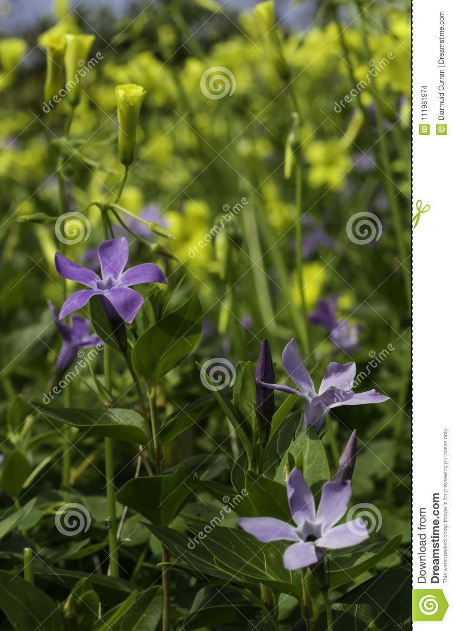Spring Meadow Yellow And Purple Flowers Stock Photo Image Of