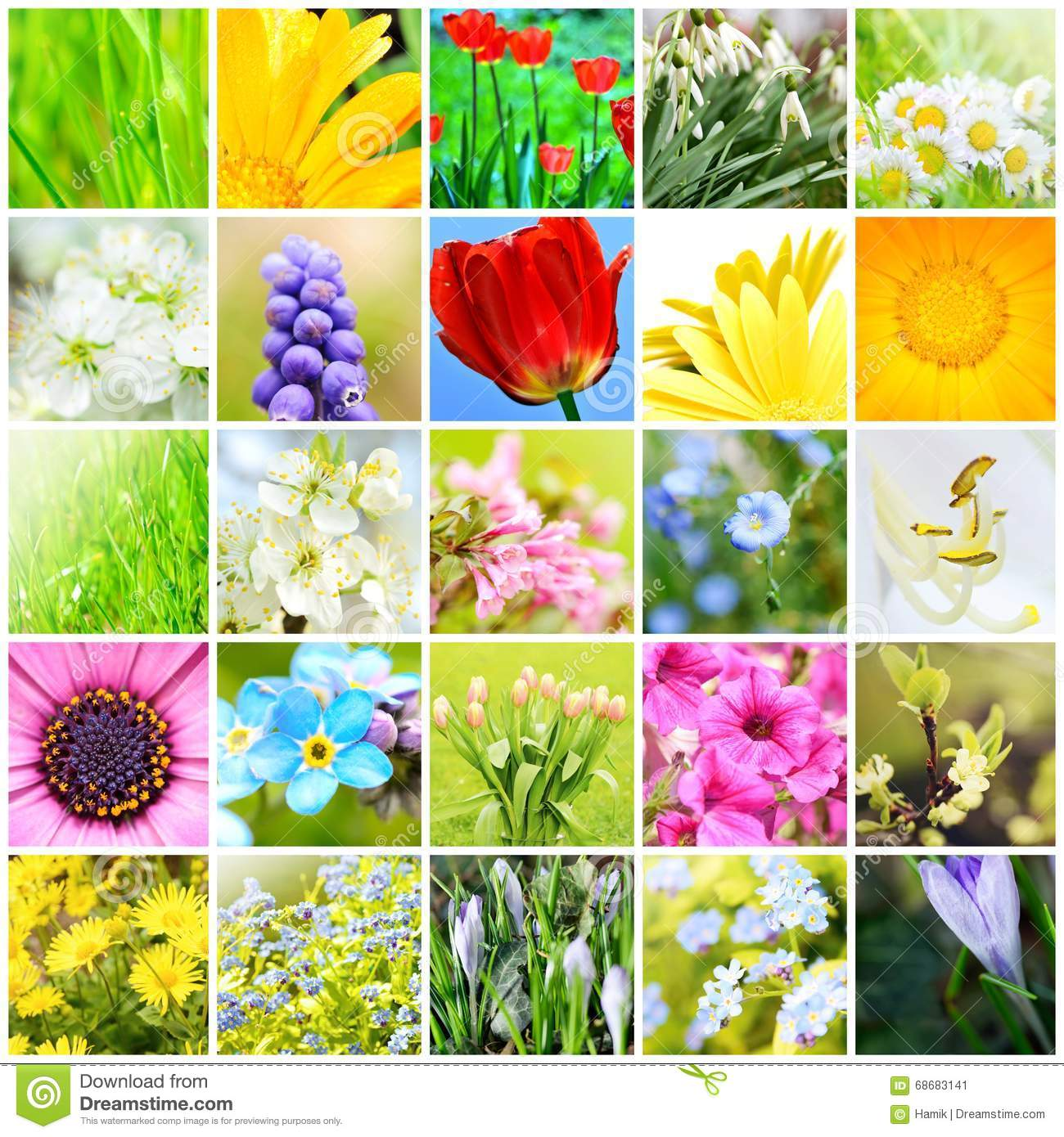 Spring natural collage stock image image of closeup for Dream plants for the natural garden