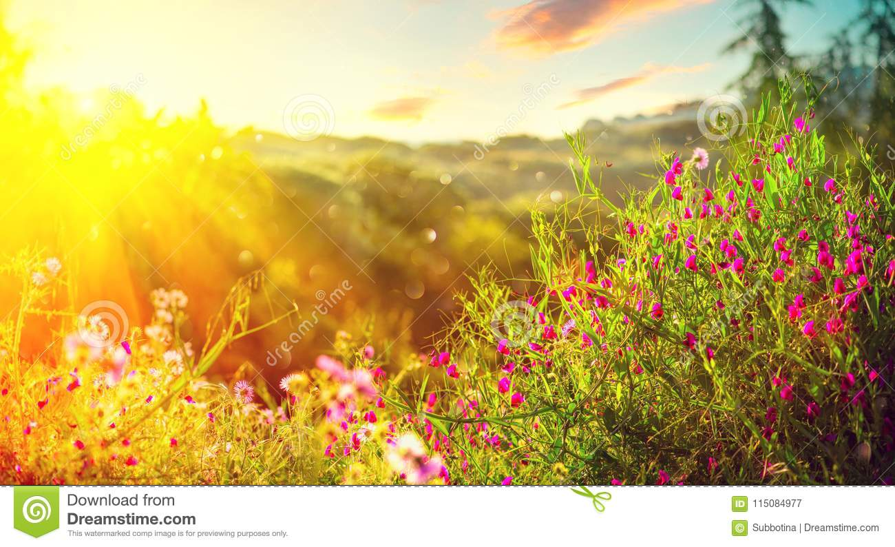 Spring nature background. Beautiful landscape park with green grass, blooming wild flowers and trees