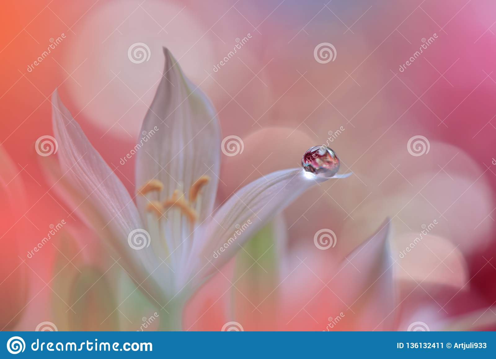 Spring nature blossom web banner or header.Abstract macro photo.Artistic Background.Fantasy design.Colorful Wallpaper.Artwork,Drop