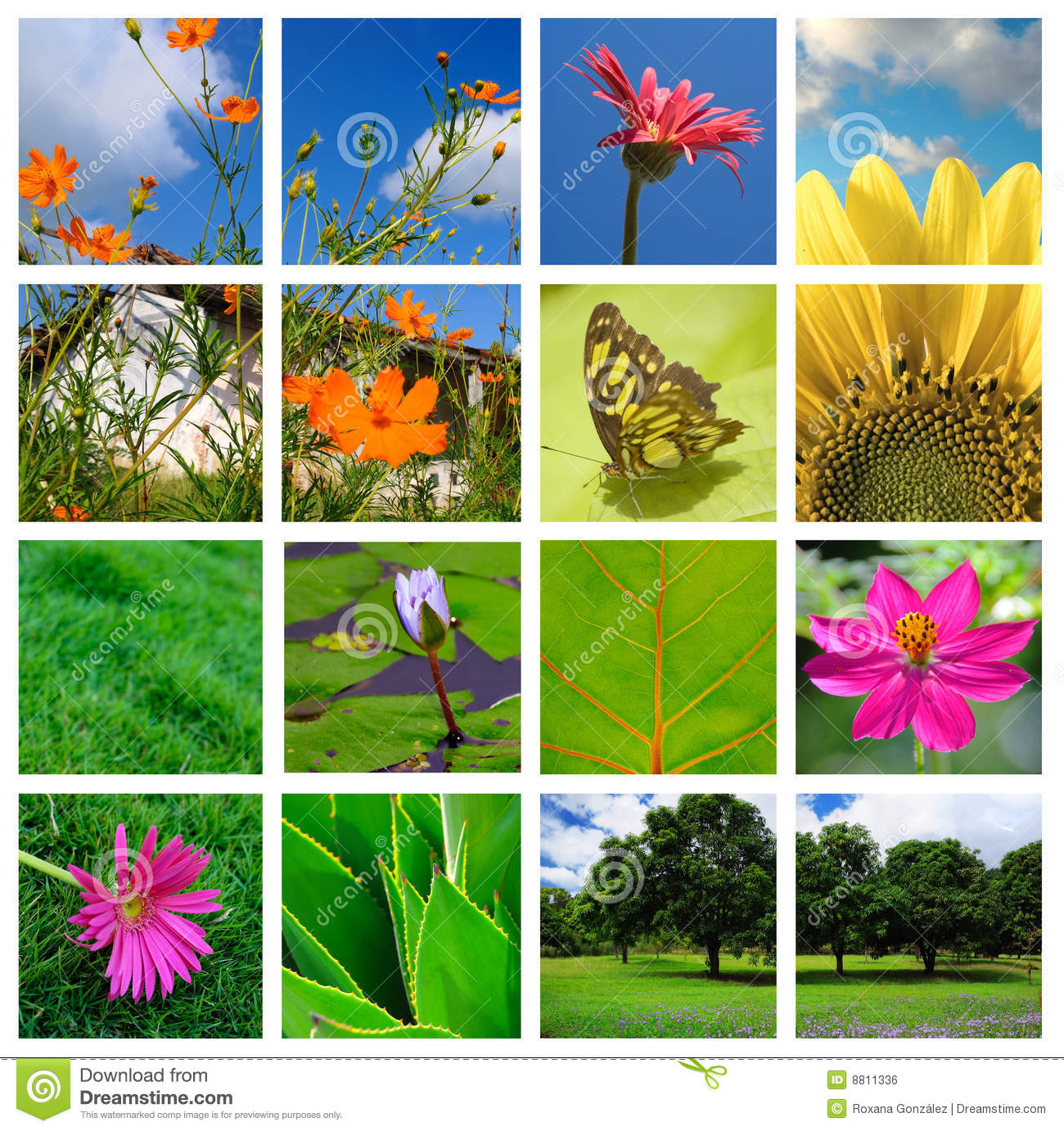 Spring And Nature Collage Royalty Free Stock Image - Image: 8811336