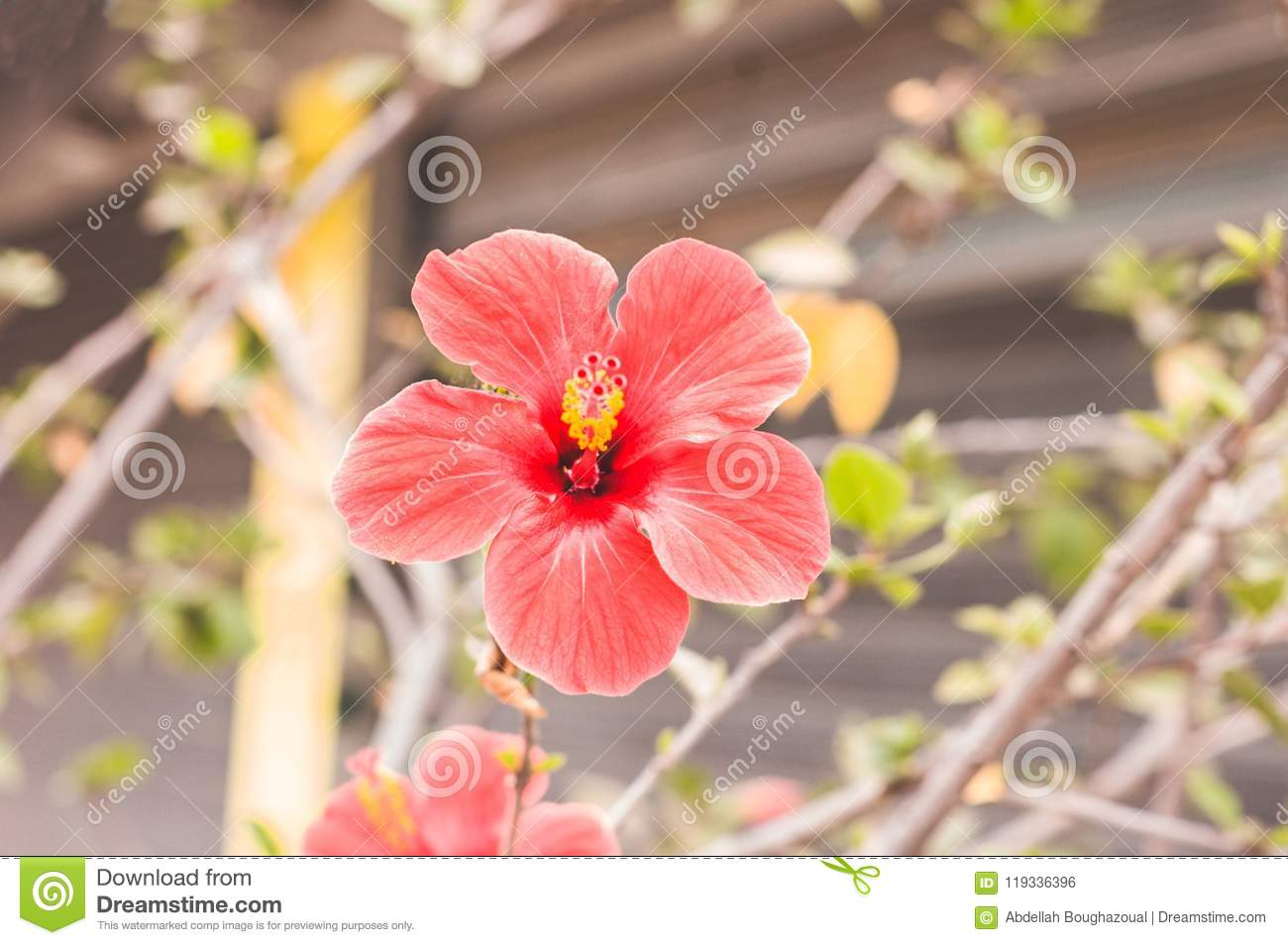 Spring Nature Pretty Red Flowers In Park Stock Photo Image Of Park