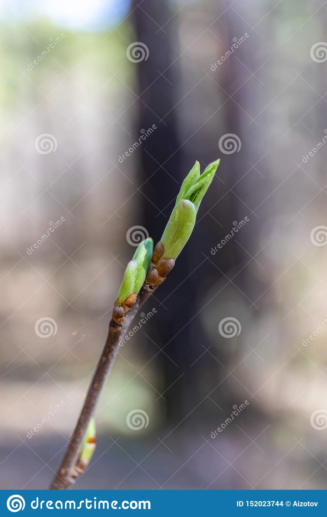 In the spring, a new life begins in nature, buds open and flowers bloom