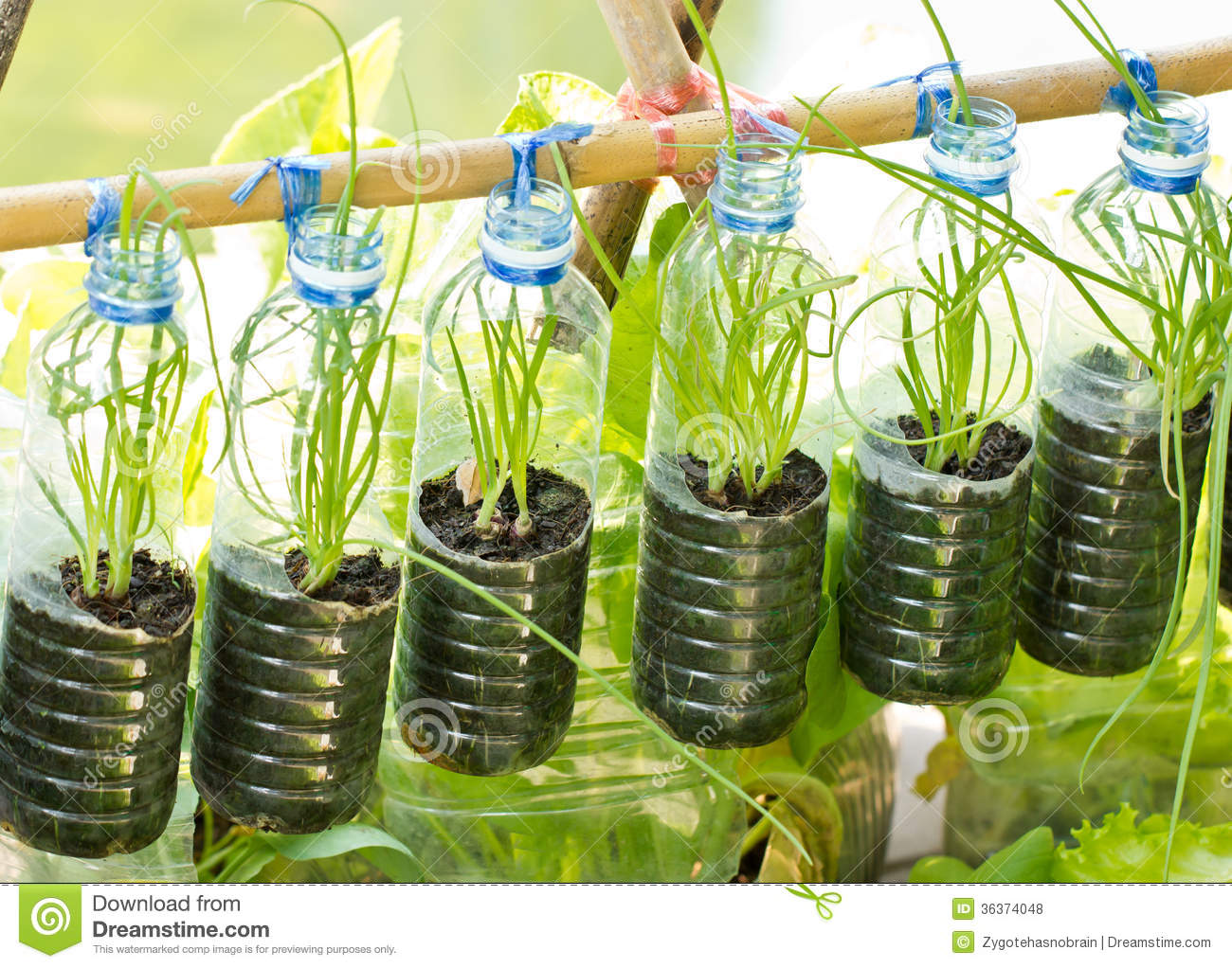 how to make vegetable plants grow in ontario