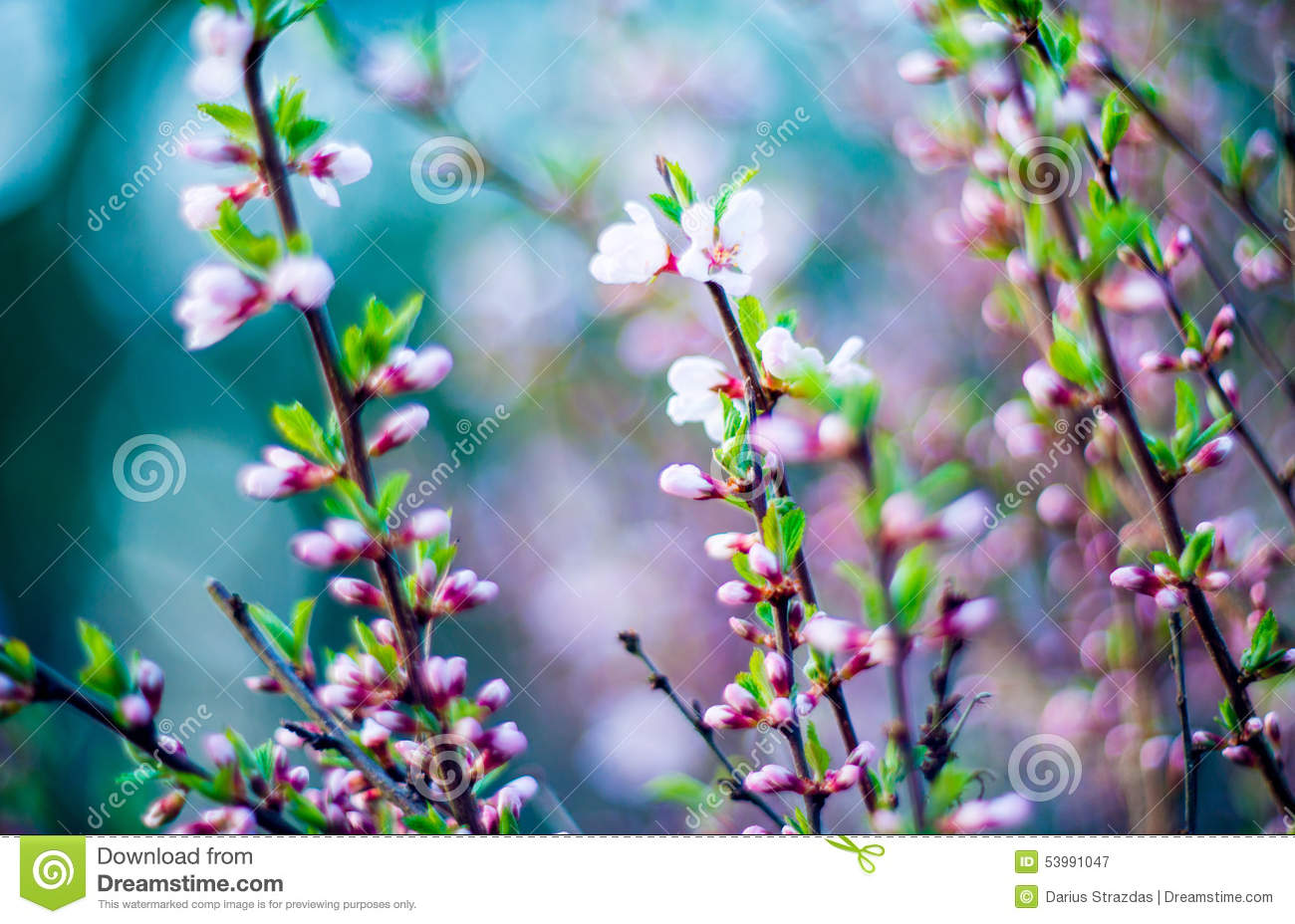Download Spring pink blooming stock image. Image of color, nature - 53991047