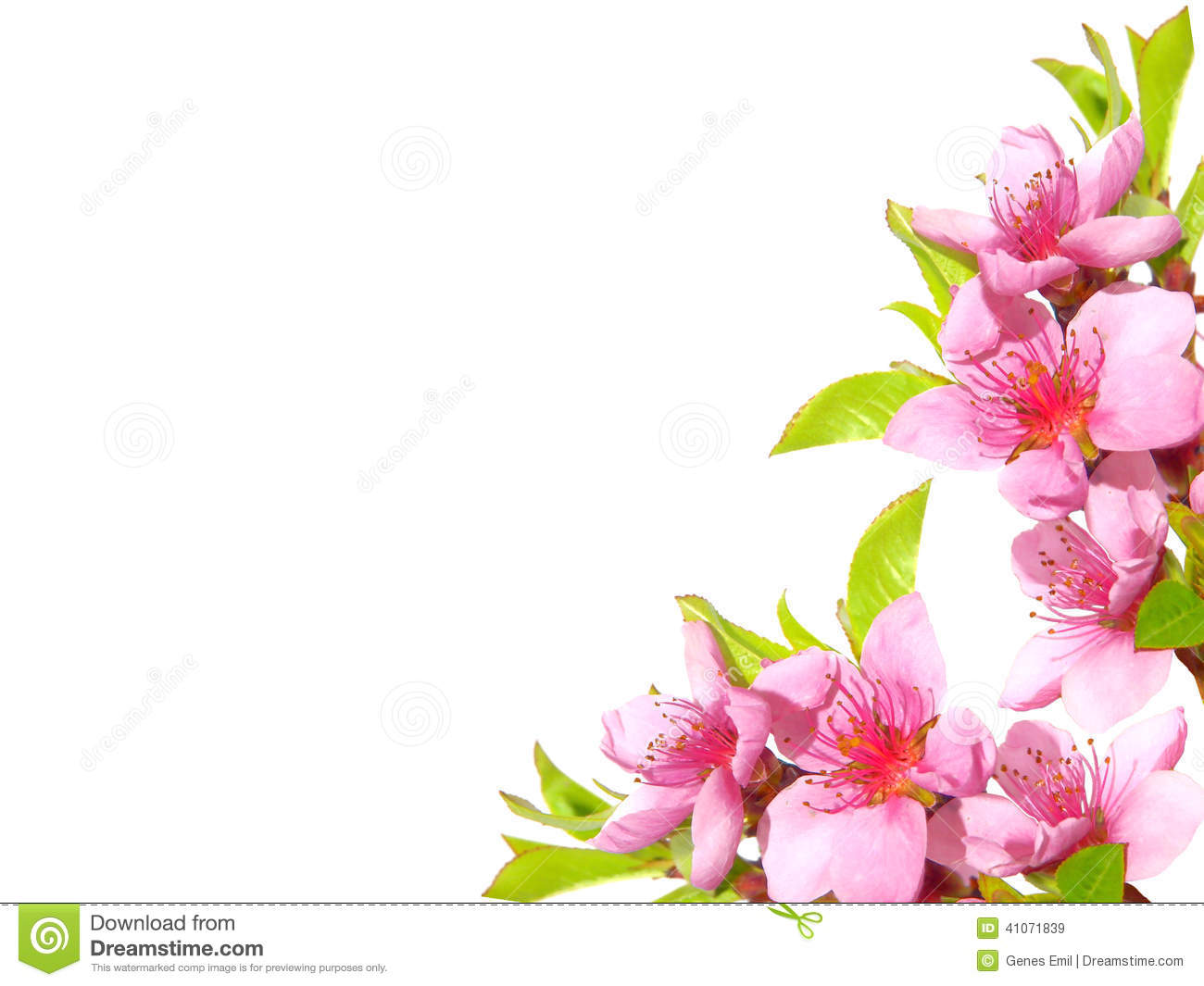 Spring Pink Blossom Stock Image Of Blooming Branch
