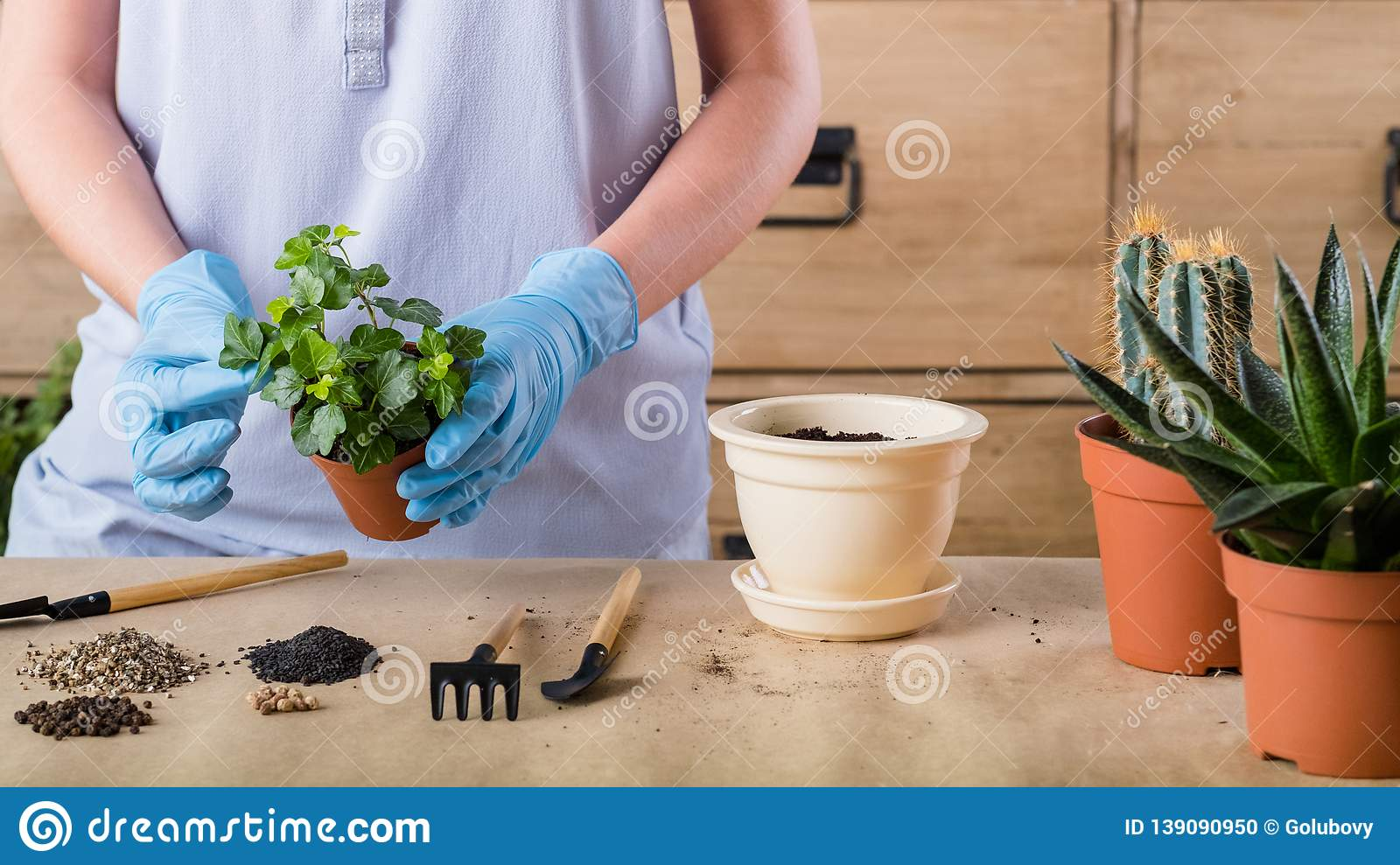 Spring Plant Repotting Indoor Garden Care Woman Stock Photo