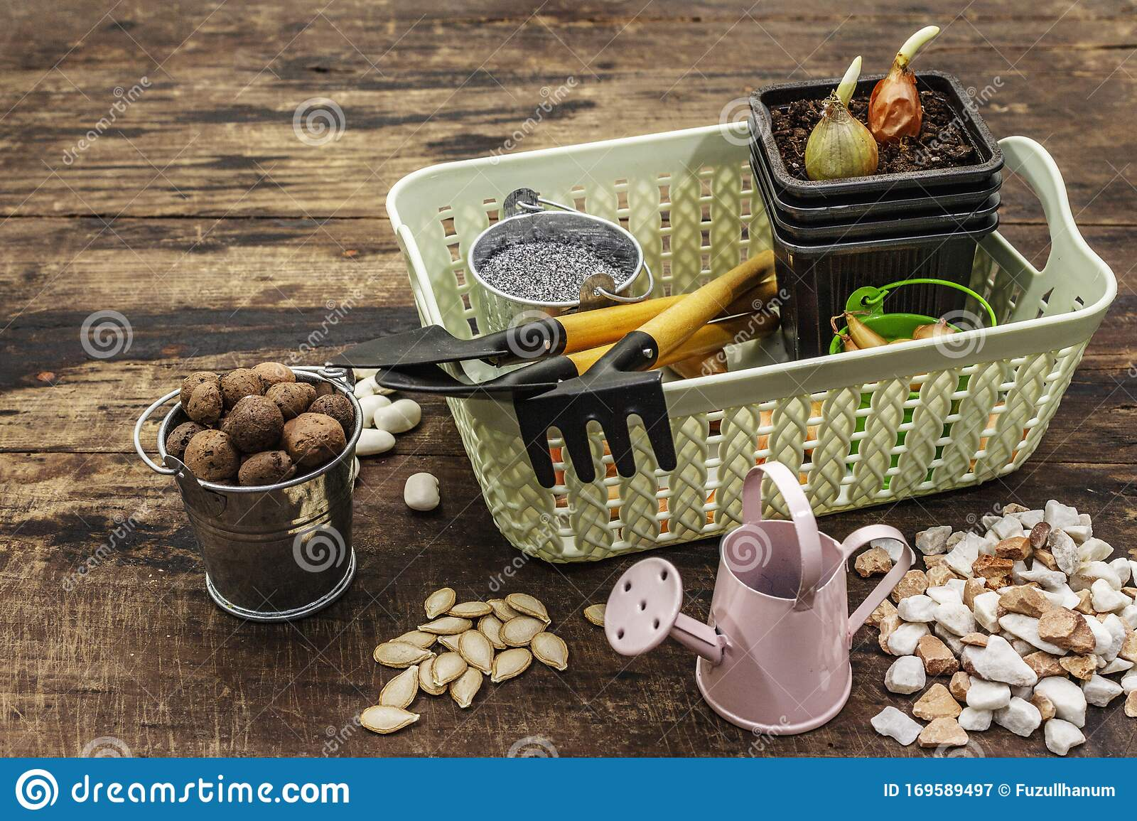 Spring Planting And Gardening Concept. Tools, Watering Can, Fresh Onion Bulbs In A Bucket, Expanded Clay, Sand, Seeds. Wooden Stock Image