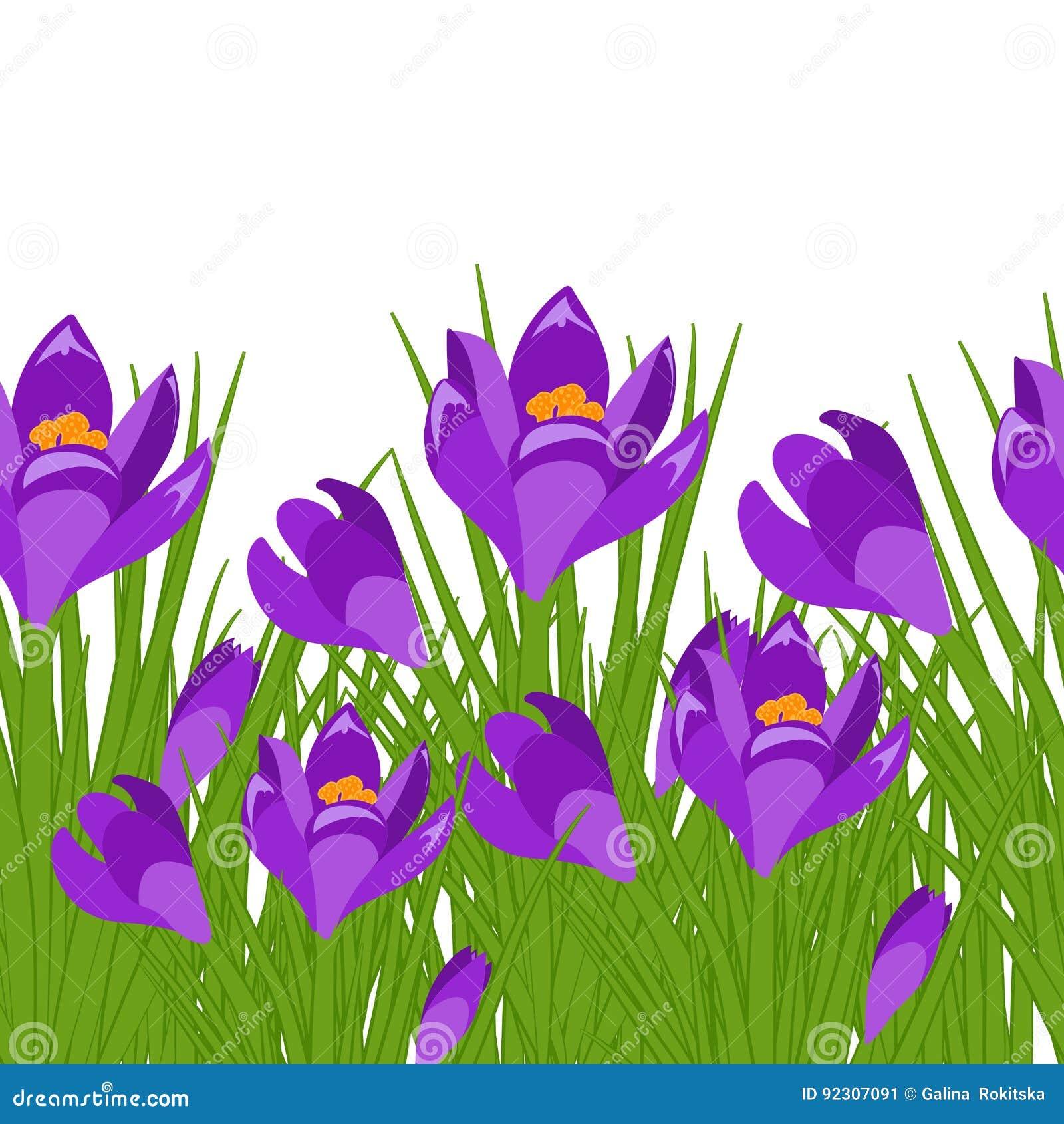 Spring Postcard With Purple Crocus Early Spring Purple Flower