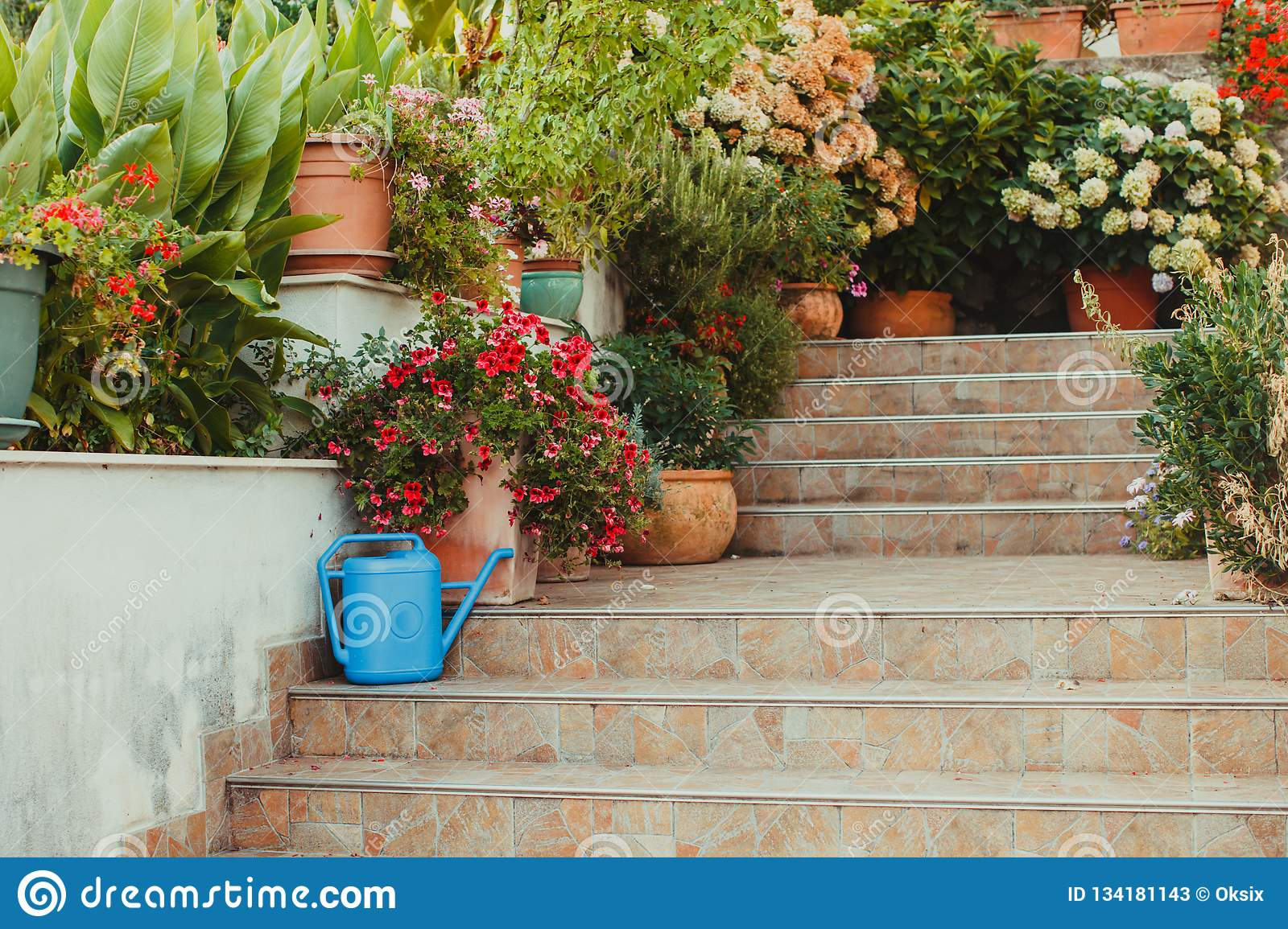 Spring Potted Flowers On A Steps Near The House Stock Image Image