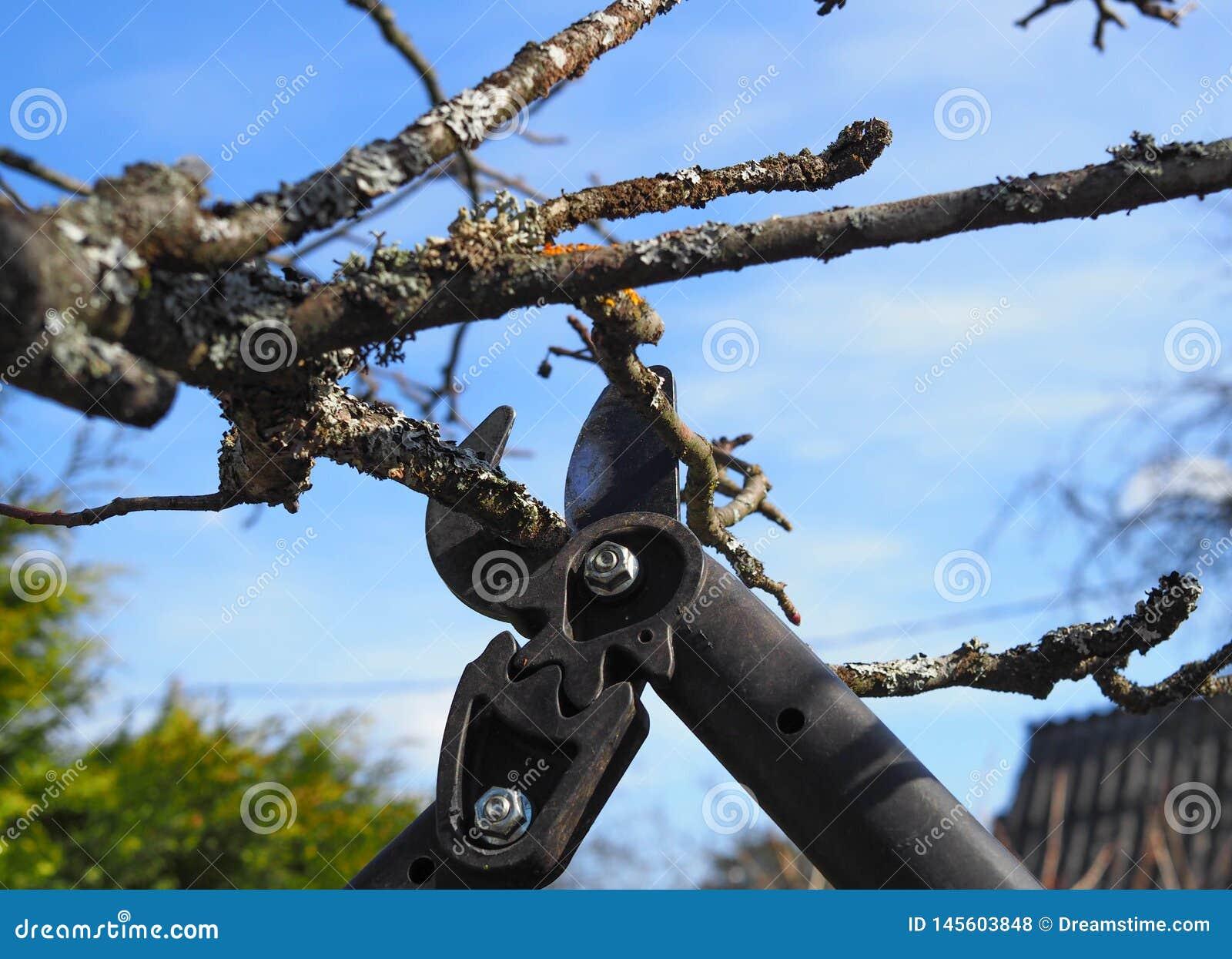 Spring pruning of treesn