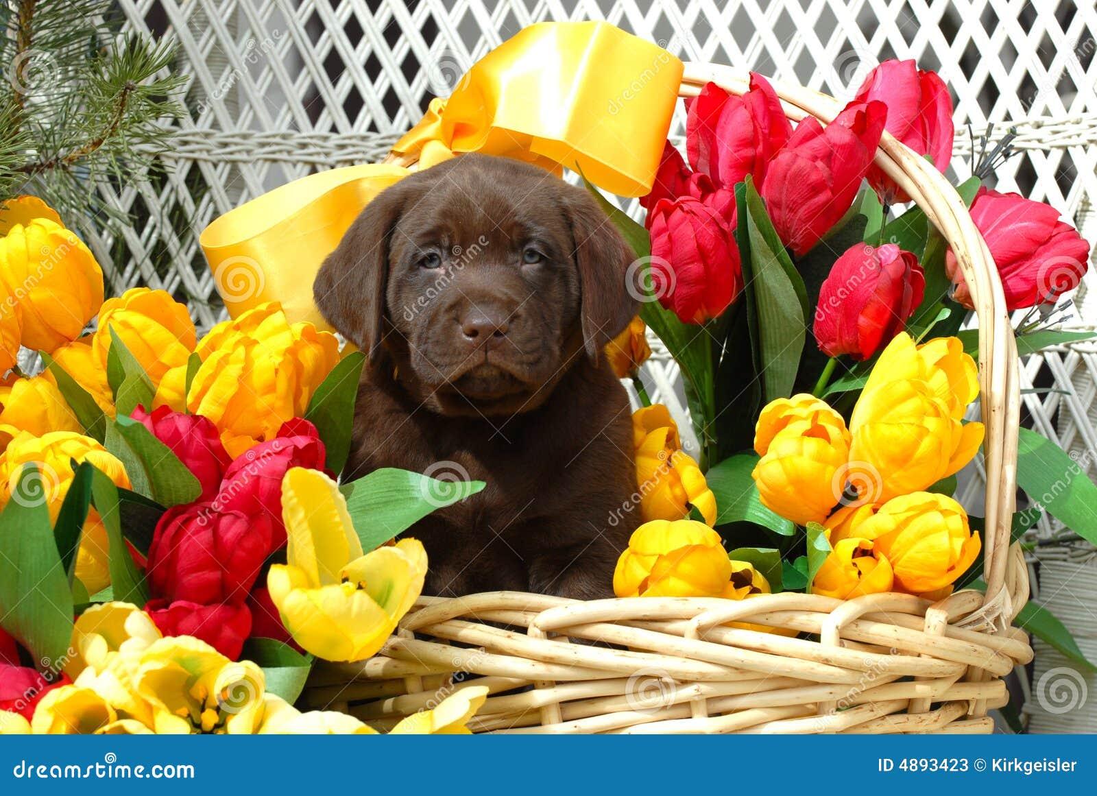 spring puppy stock photos image 4893423
