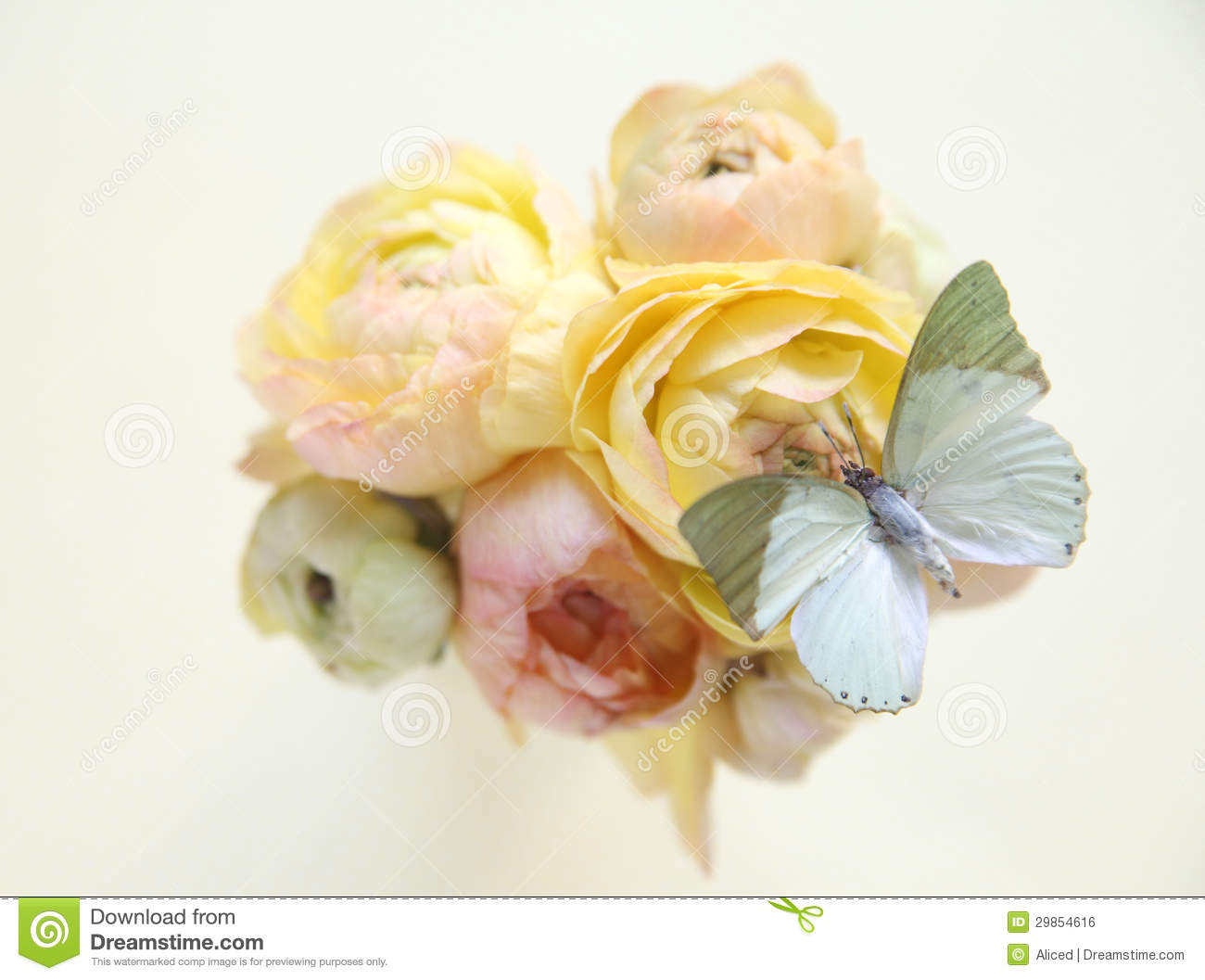 Yellow Spring Flowers With Butterfly Stock Photo Image Of Feminine