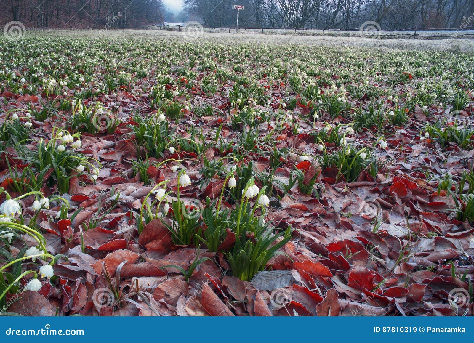 Spring Rare Flowers Stock Image Image Of Nature Beautiful 87810319