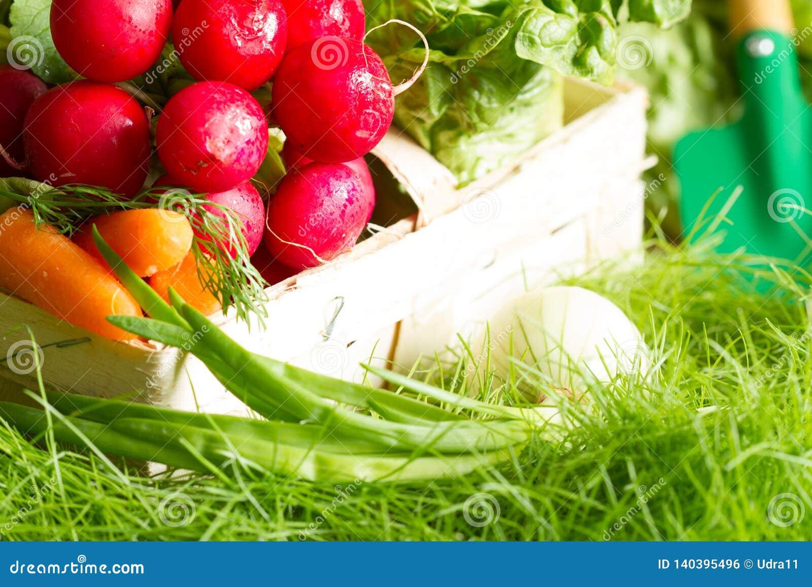 Spring raw fresh organic vegetables harvesting in the garden