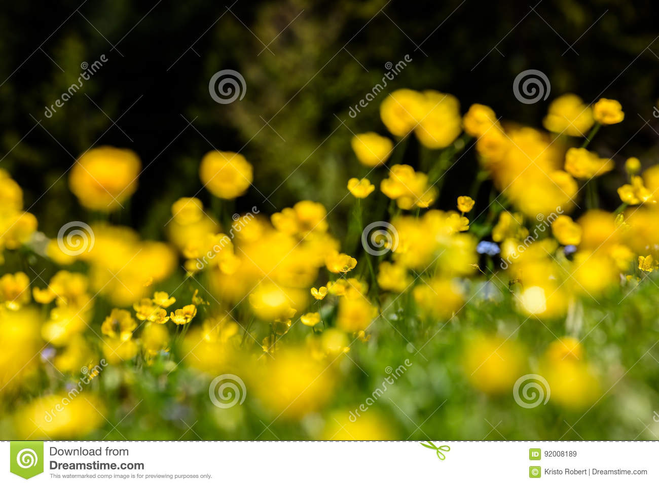 Spring Scene In Mountain Stock Image Image Of Beauty 92008189