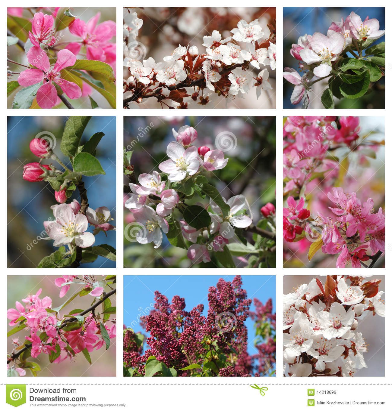 Wedding Flowers For May Season : Spring season nature collage with flowers royalty free