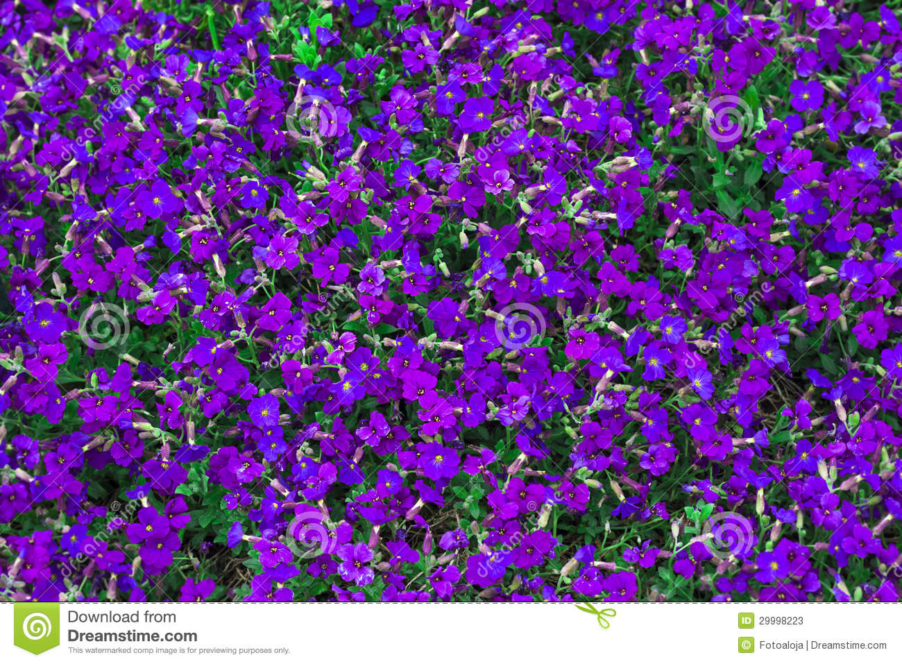 Flower Floral Purple Tiny Spring Plants Nature Stock