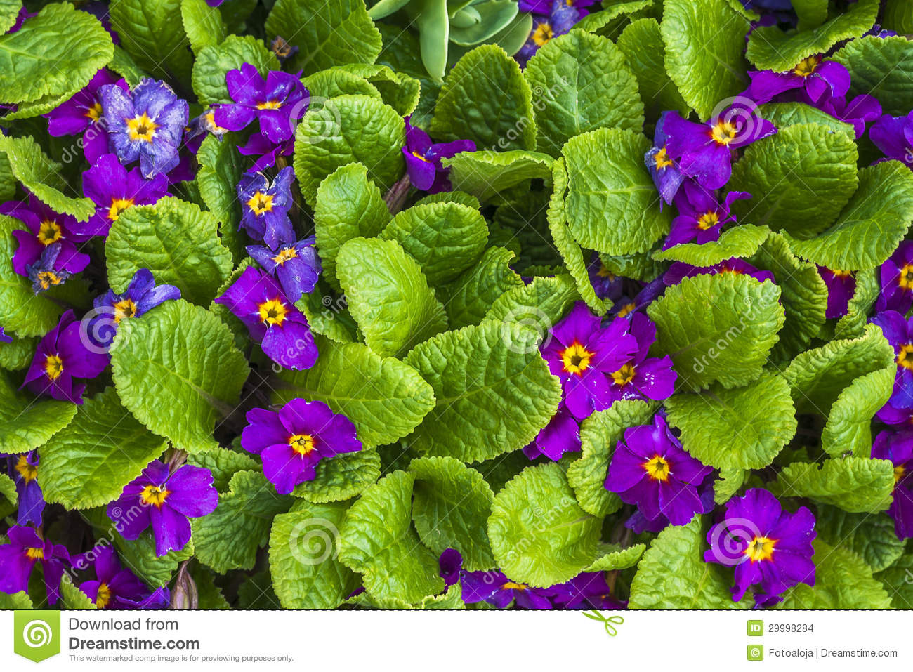 Flower Floral Purple Tiny Spring Plants Nature Stock Photo Image