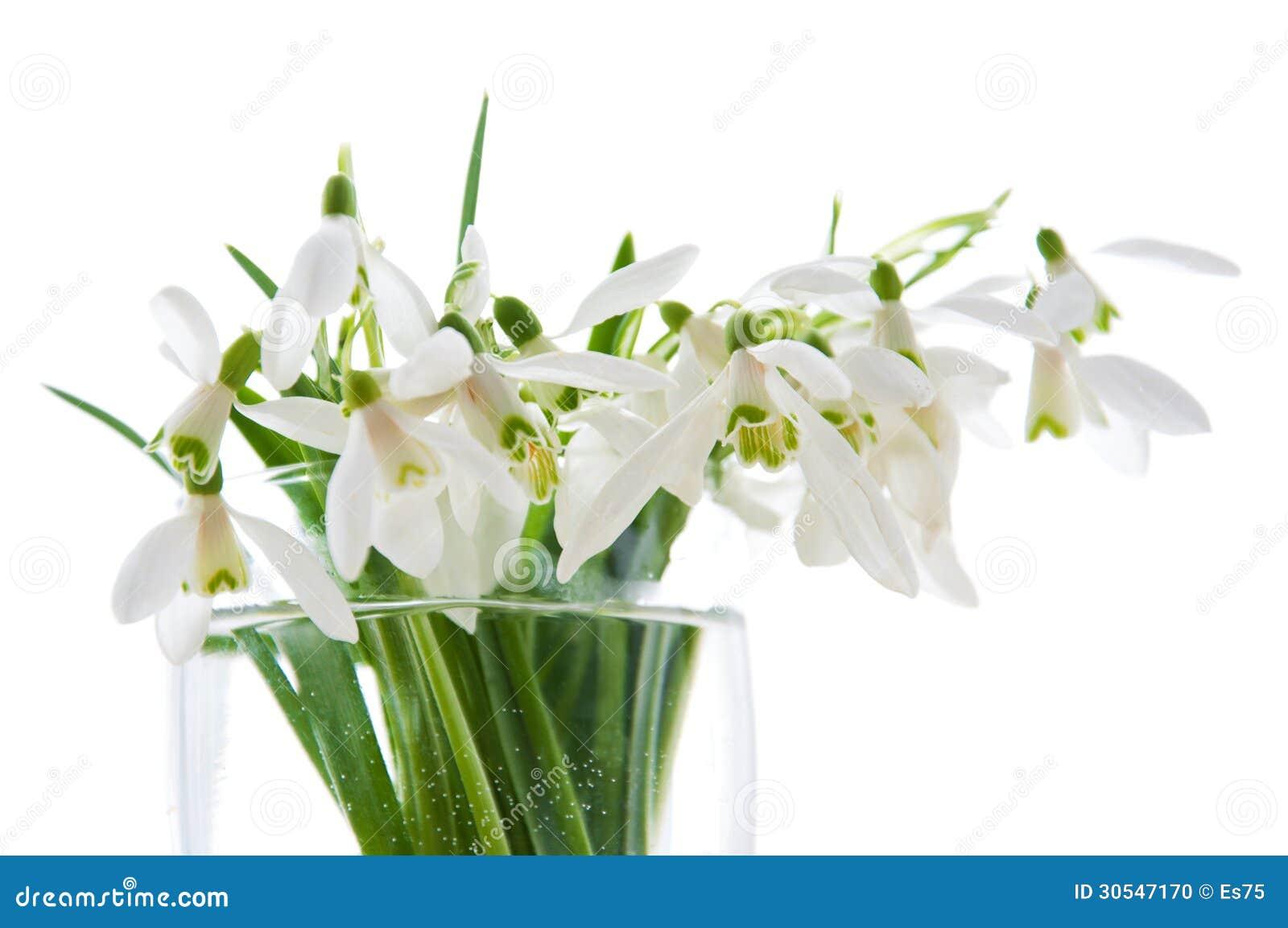 Spring Snowdrops Stock Photo Image 30547170