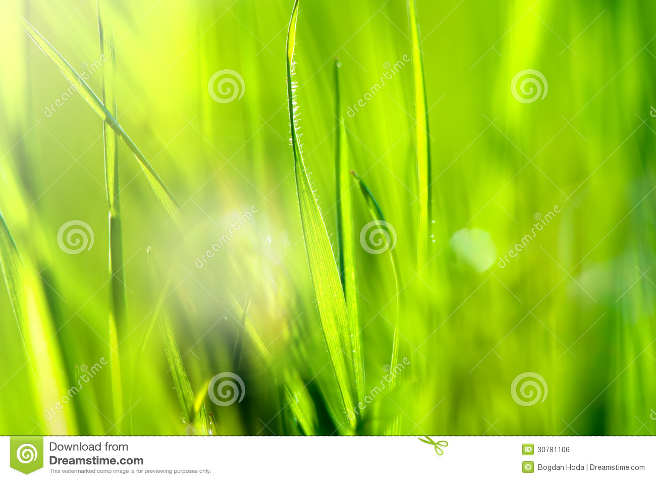 Spring and summer abstract nature background with grass and sun