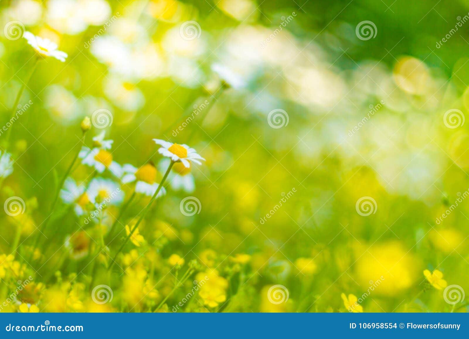 Closeup of dandelion on natural background under sunlight. Inspirational nature concept