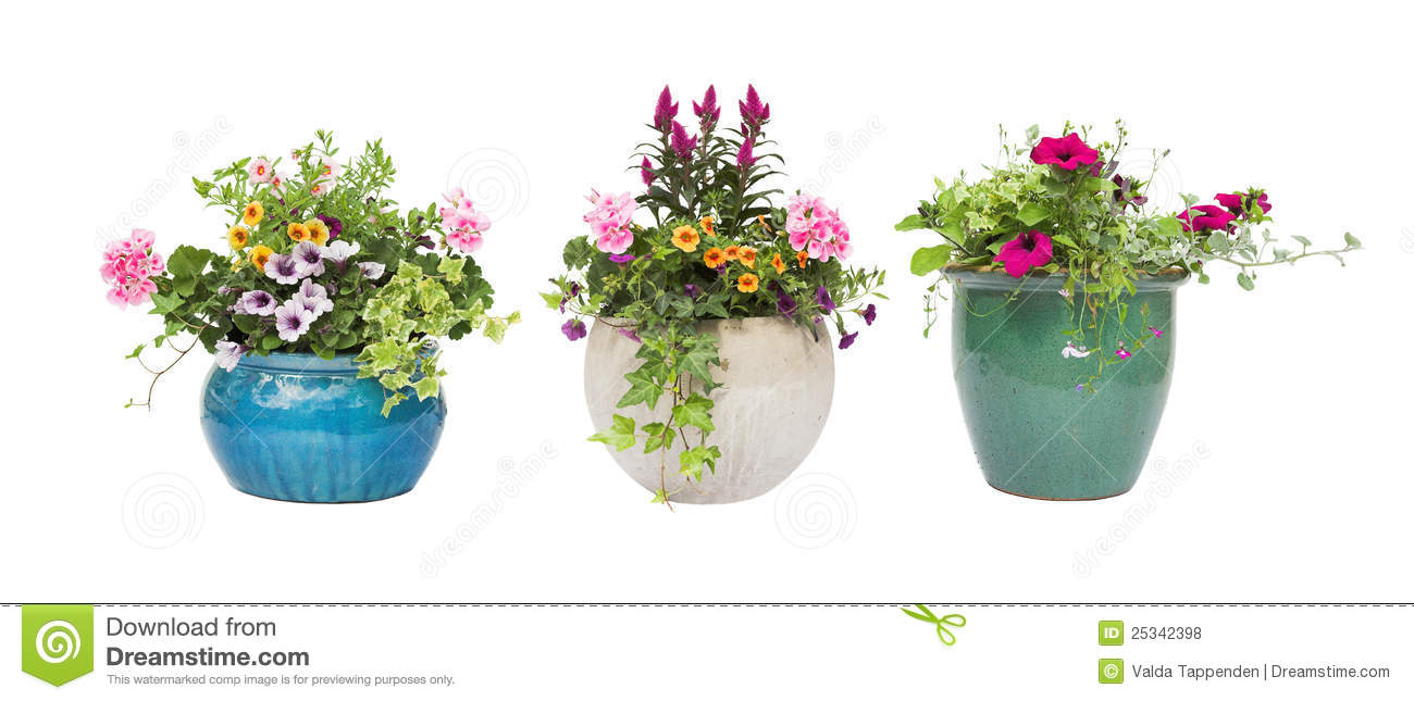 spring summer flower pots isolated on white stock photo - image of