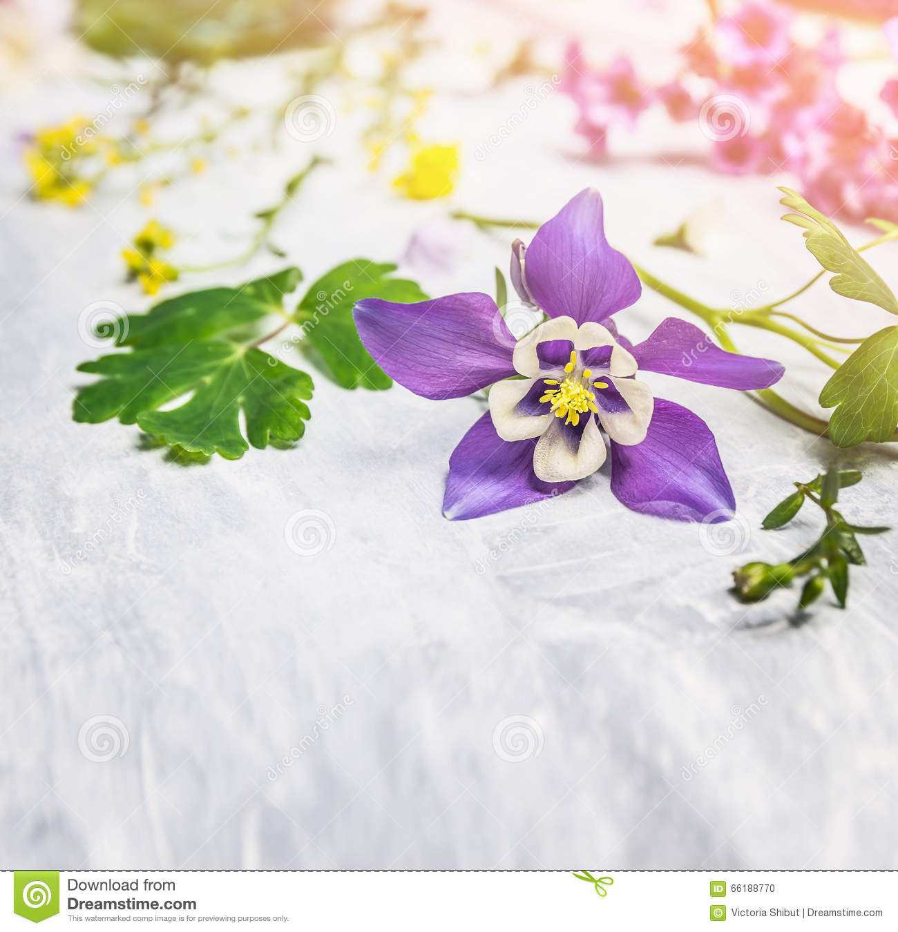 Plants for spring and summer - Spring Or Summer Flowers And Plants On Light Wooden Background