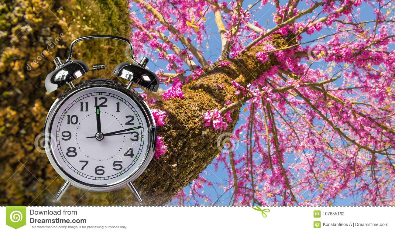 Spring time clock flowers nature space for your text , background