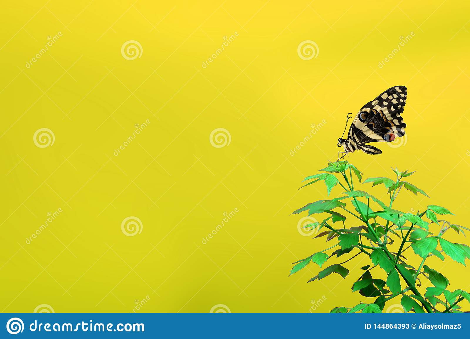 Spring Time Concept, Beautiful Butterfly and Blank Area for the Text