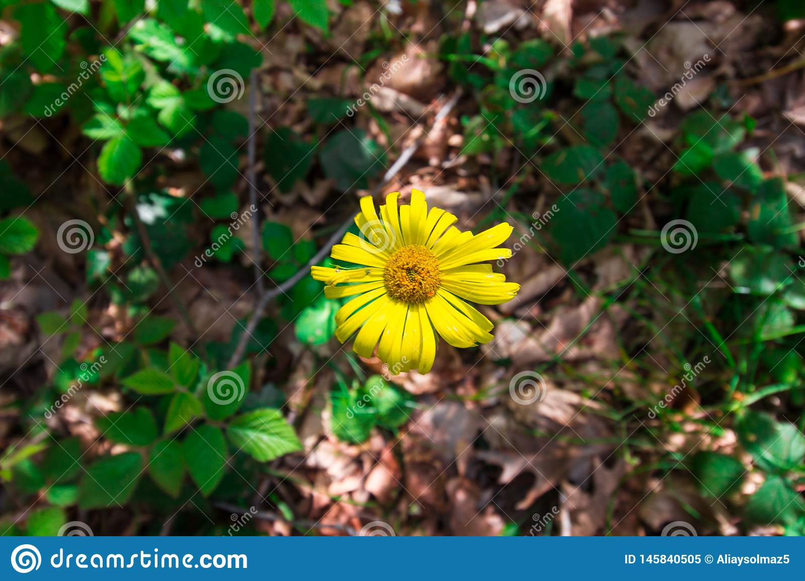 Spring Time For Turkey, April 2019, Yellow Flower, Belgrad Forest, Bright Day