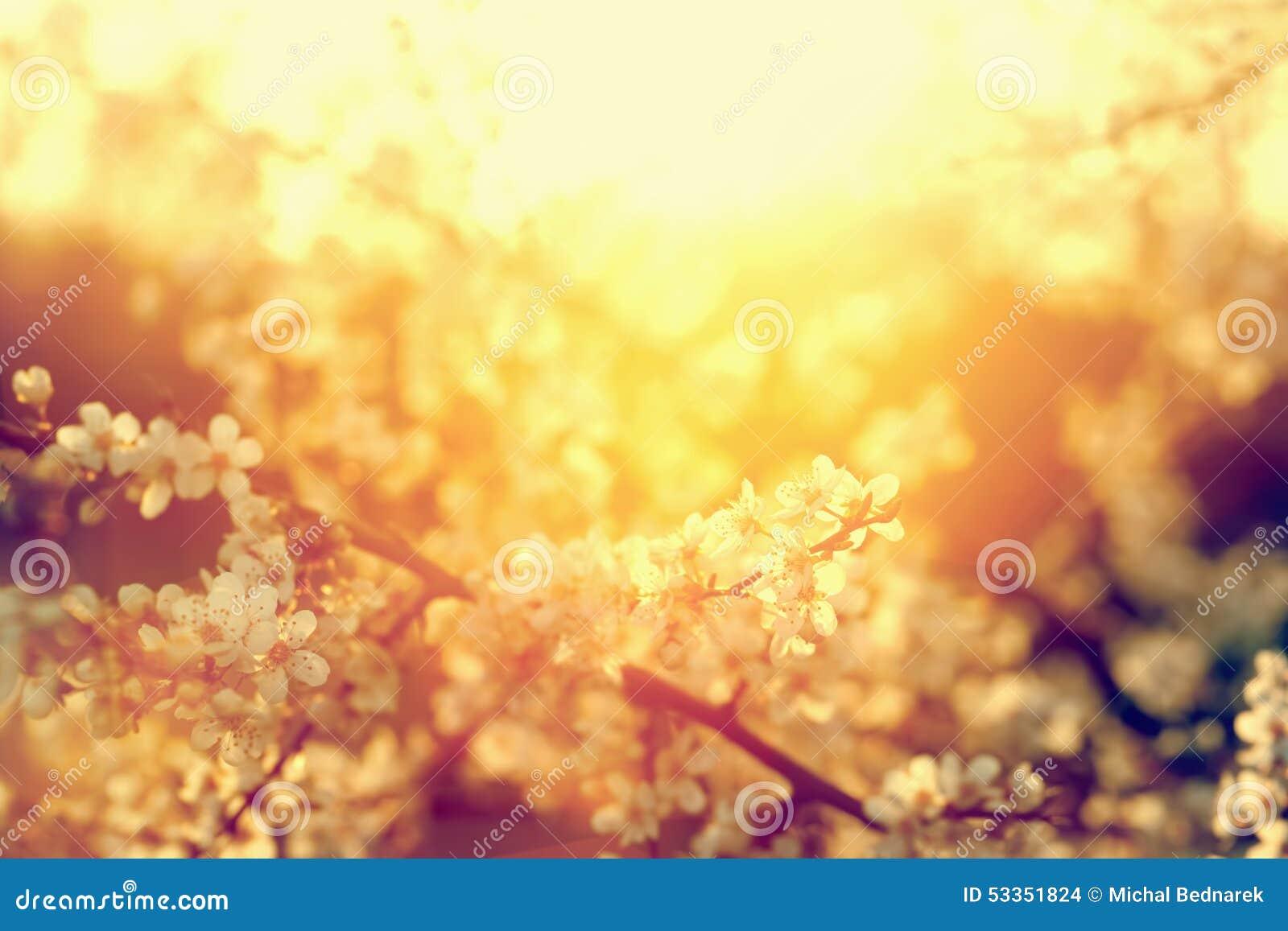 Spring tree flowers blossom, bloom in warm sun. Vintage