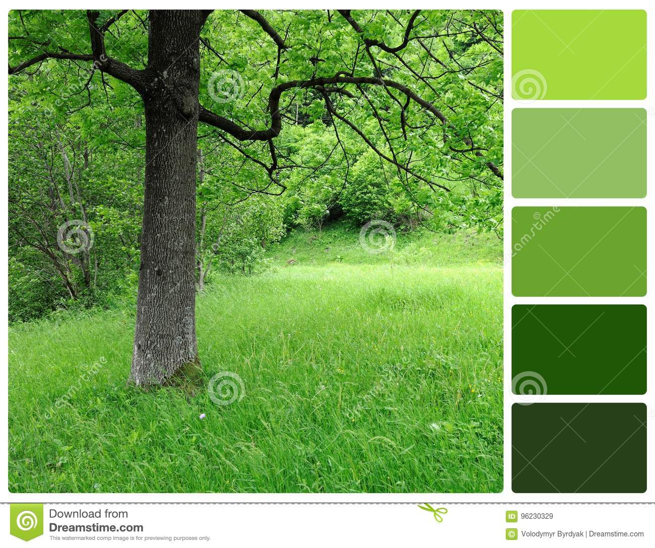 Spring Tree With Palette Color Swatches Stock Image - Image of ...