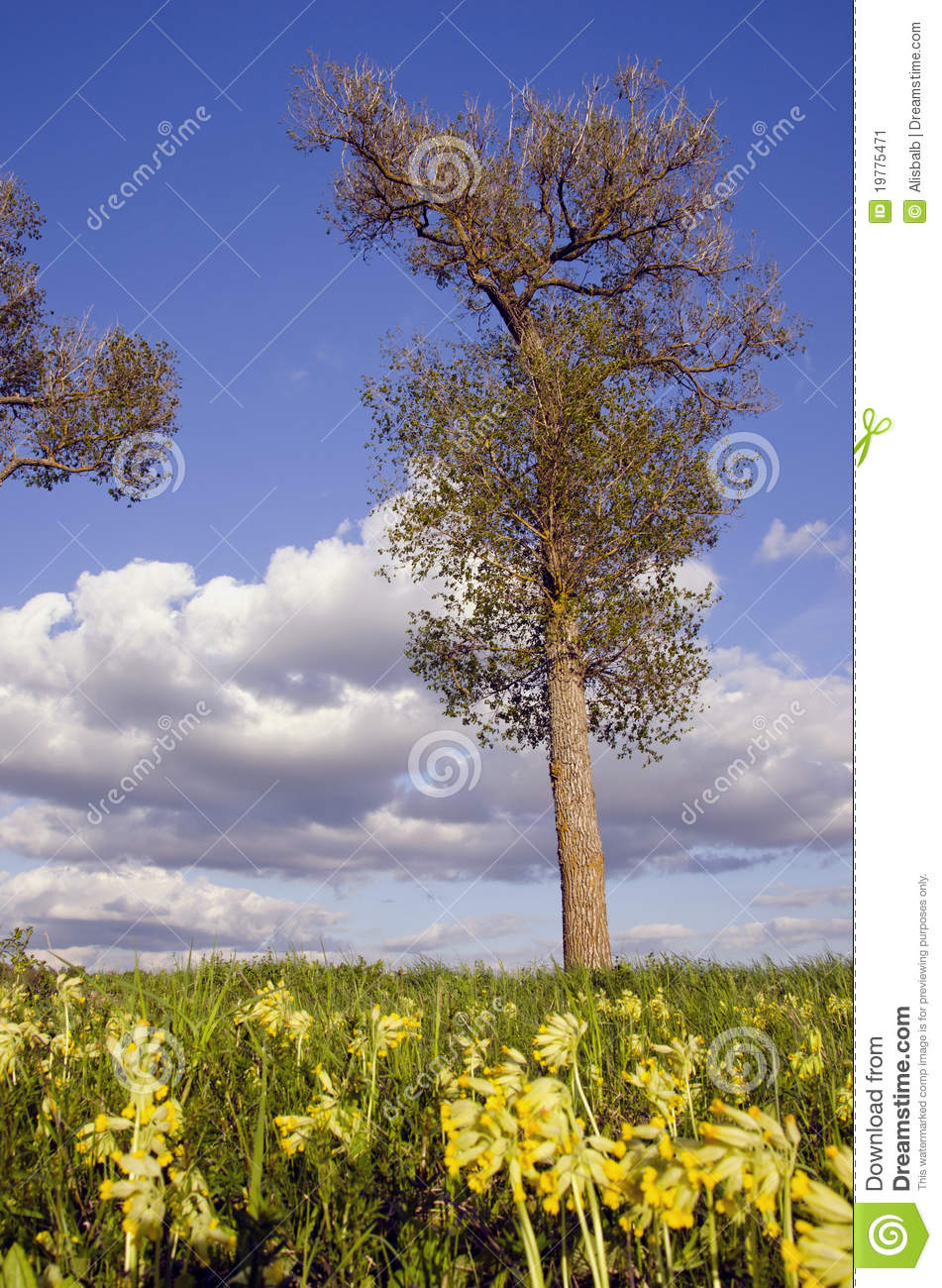 spring trees background - photo #42