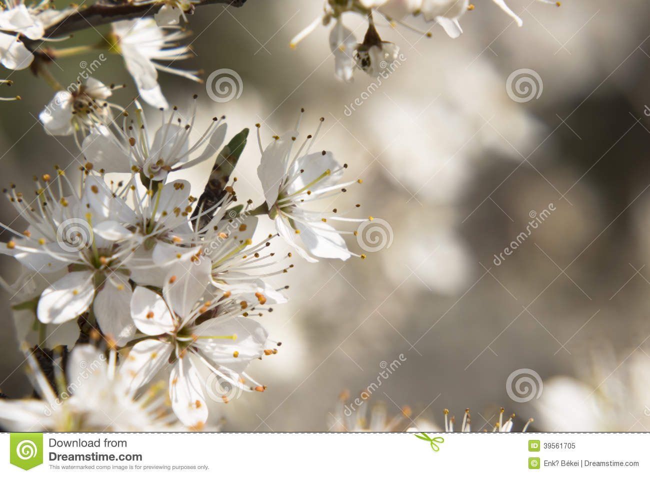 Spring Tree With White Flowers Stock Image Image Of Background