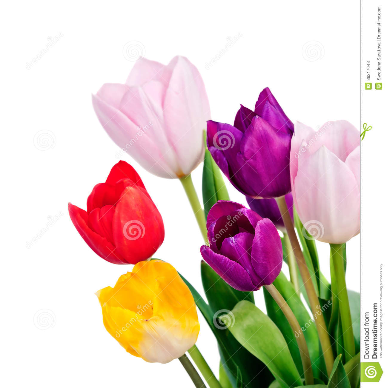 Spring tulip flowers bunch stock image image of bloom 36217043 spring tulip flowers bunch mightylinksfo