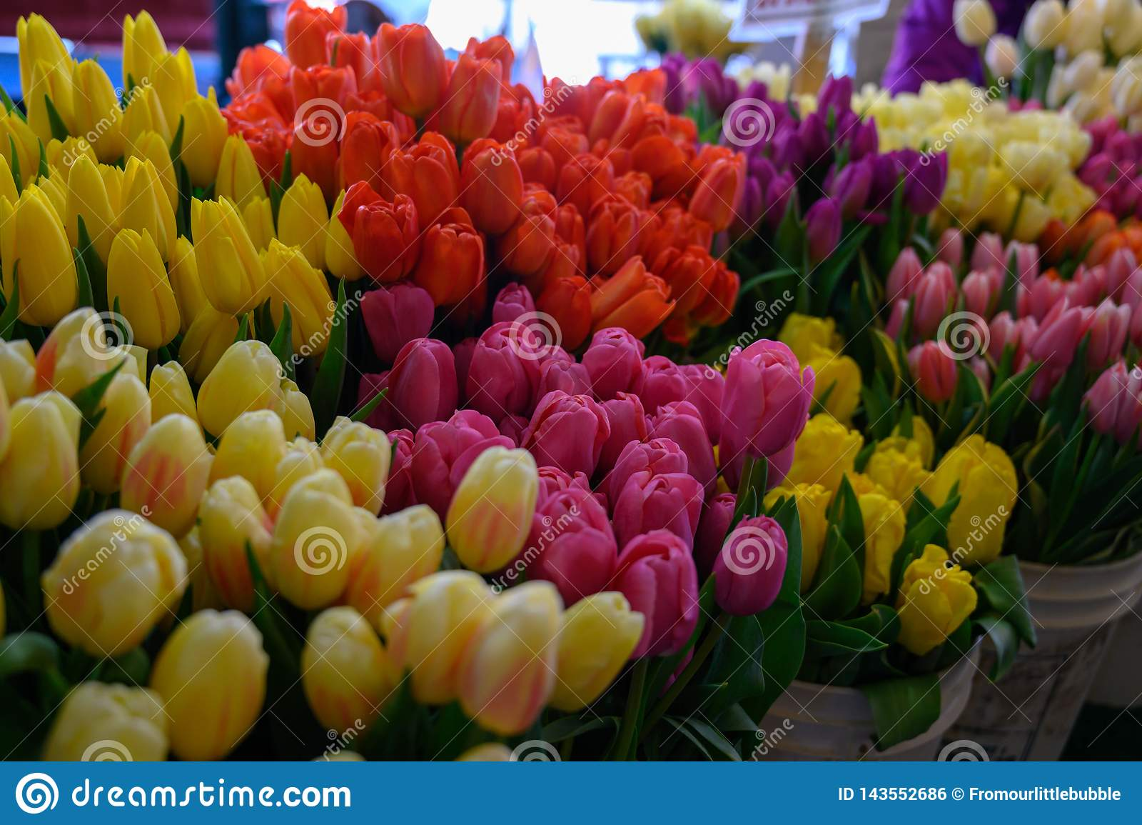 Spring Tulips at Pike Place Market Seattle Wa