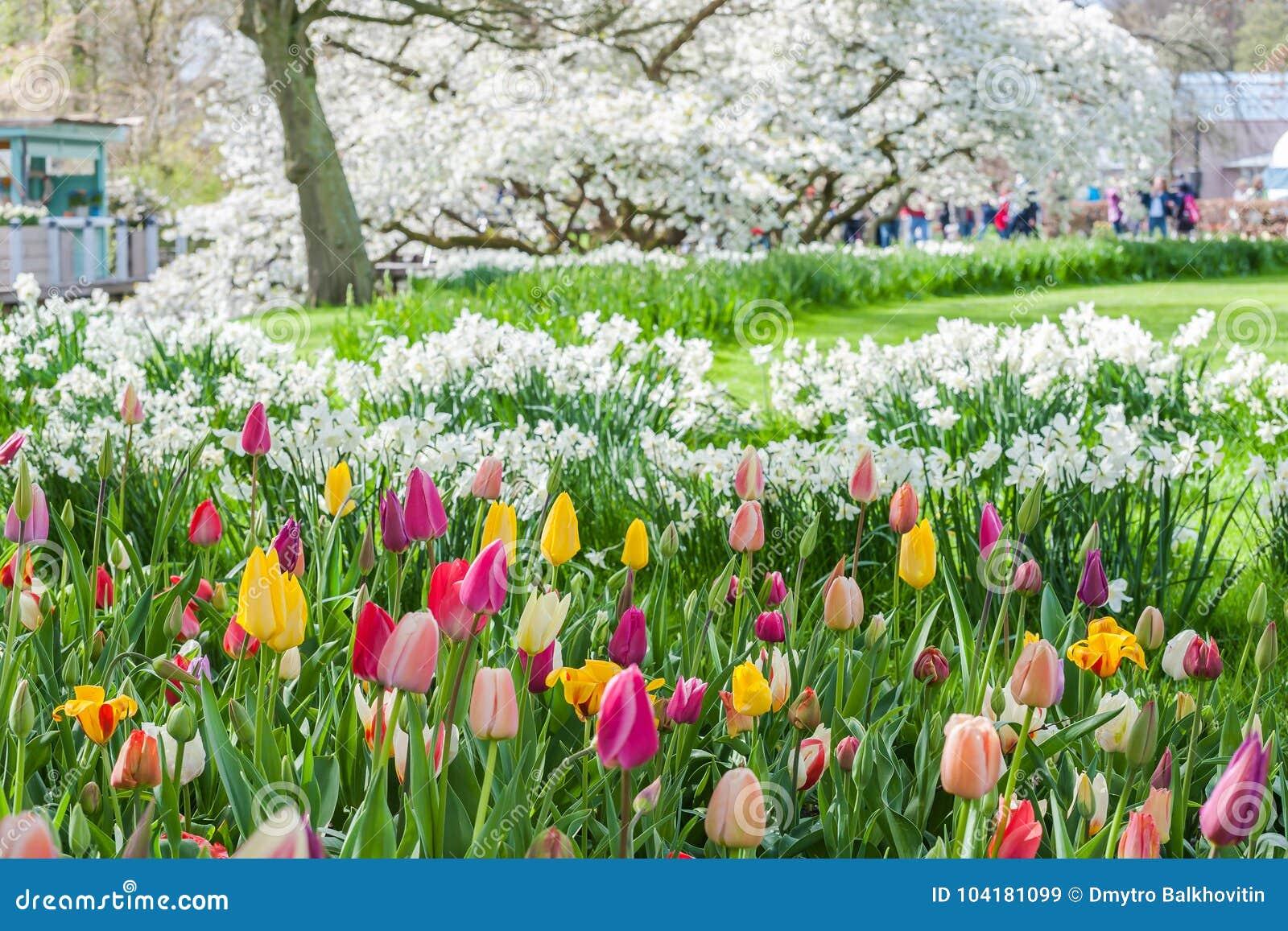 Spring View Of Keukenhof Park Stock Image Image Of Beautiful