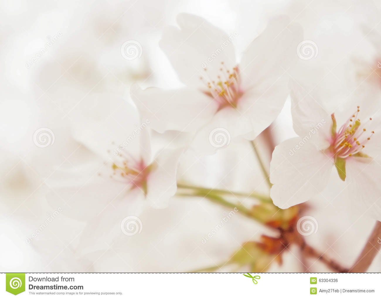 Spring white blossom flower close up stock photo image of bloom download comp mightylinksfo