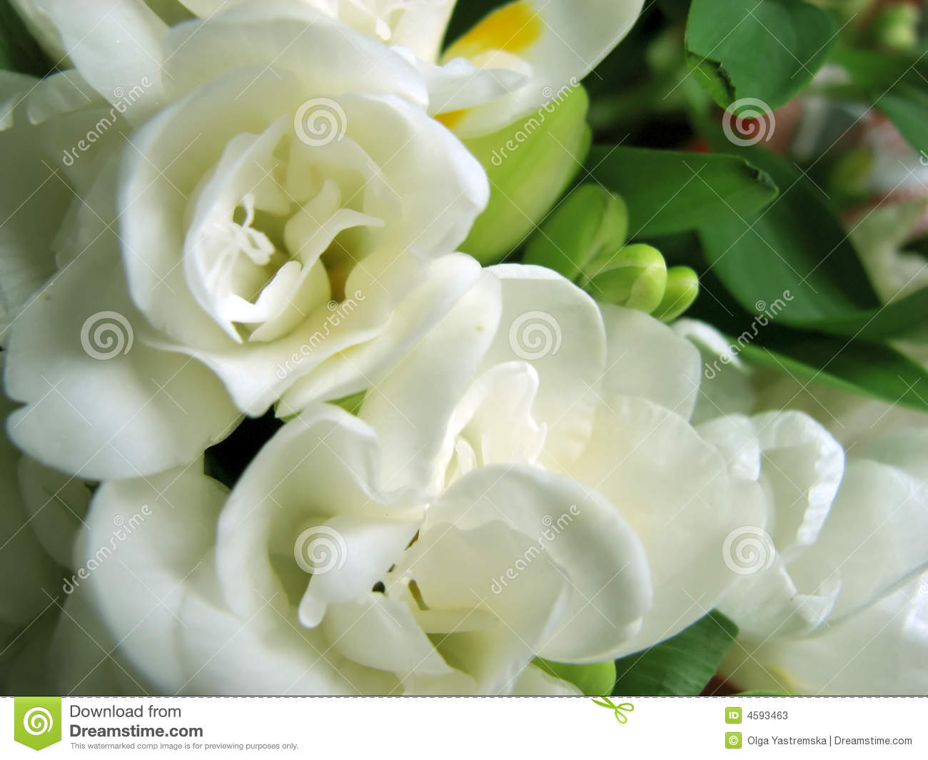 Spring White Flowers Stock Image Image Of Flowers First 4593463