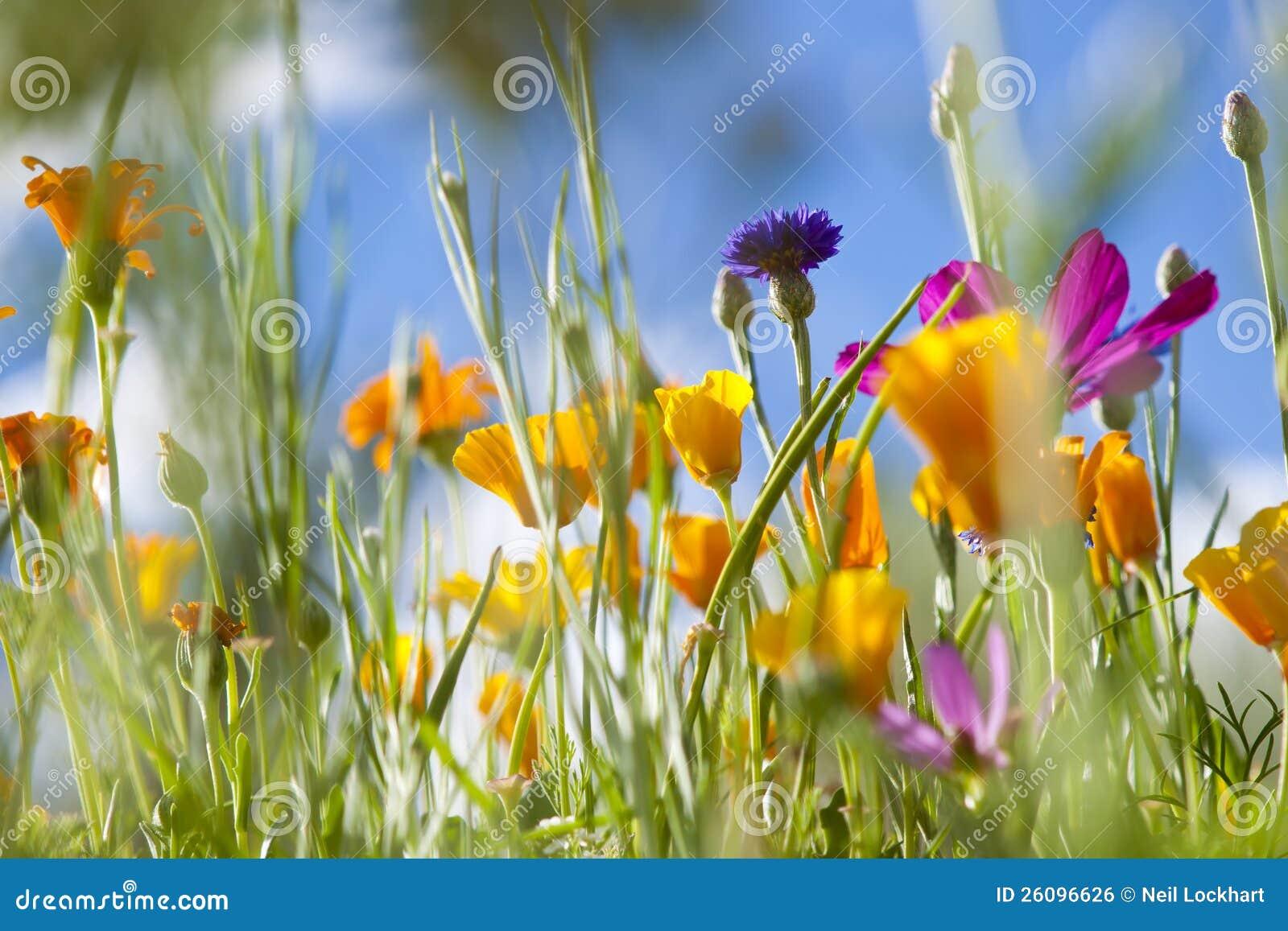 Spring Wild Flowers